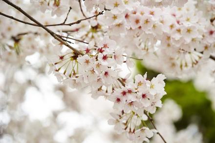『春と修羅』有名な6つの詩を現代語訳の意味を含めて解説!宮沢賢治の世界 画像