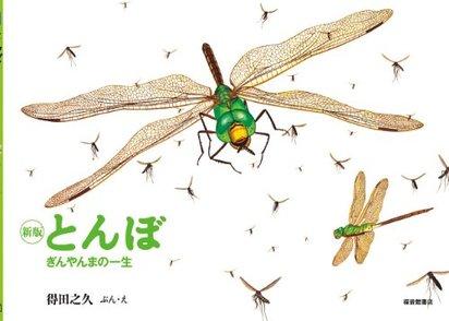 5分でわかるギンヤンマ!大きさや生息地、寿命、種類など生態を解説!画像