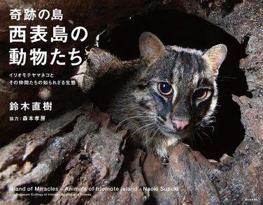 5分でわかるイリオモテヤマネコの生態と特徴!保護活動についても解説!画像