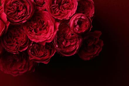 5分でわかる薔薇戦争!背景と流れ、結果を解説!おすすめ本も紹介画像