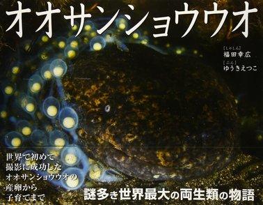 5分でわかるオオサンショウウオの生態!寿命、大きさ、飼育に味まで!画像