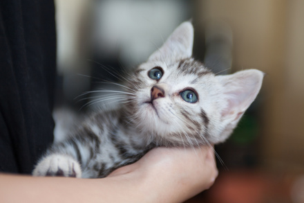 5分で分かる『吾輩は猫である』!登場人物、あらすじ、結末から名作を解説!画像