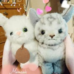 chat.blancプロフィール画像