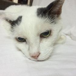 埒子 プロフィール画像
