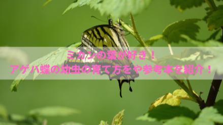 アゲハ蝶の幼虫の育て方を紹介!餌やりから参考になる本まで画像