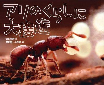 5分でわかるアリの生態!種類や働きアリの法則、巣の構造をわかりやすく解説画像