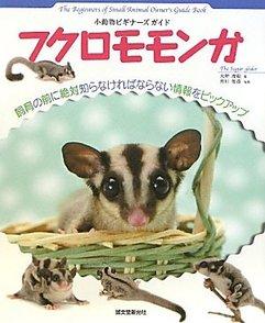 モモンガの飼育方法をご紹介!種類や生態をきちんと理解しましょう画像