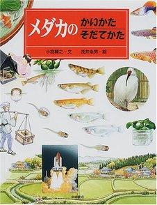 メダカの飼育方法の基本をご紹介!初心者におすすめの種類など画像