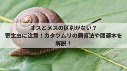 カタツムリの飼い方を簡単に紹介!赤ちゃんの飼育から餌の頻度まで画像