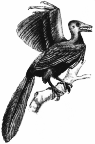5分でわかる始祖鳥(アーケオプテリクス)の進化。鳥類なのか爬虫類なのか画像