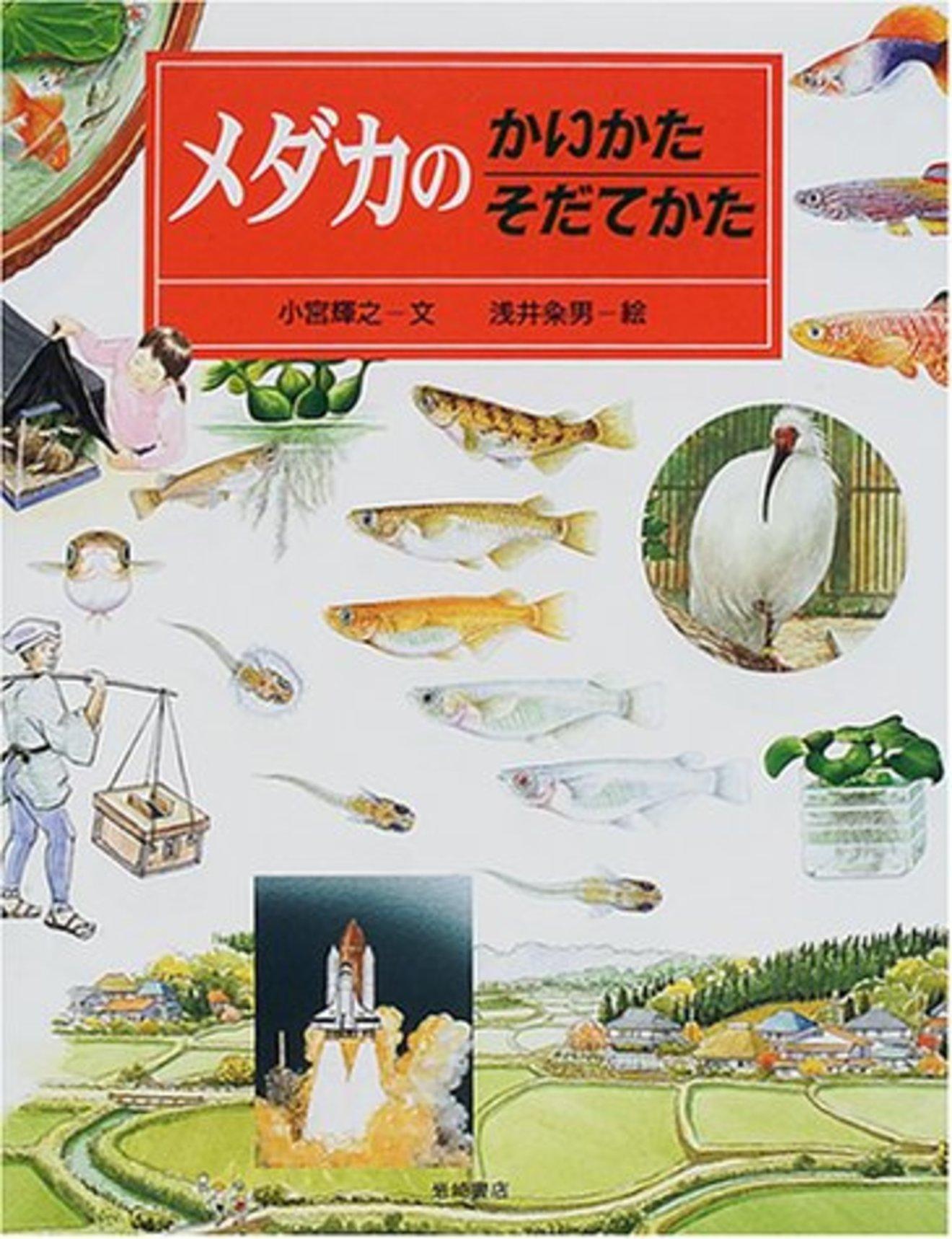 メダカの飼育方法の基本をご紹介!初心者におすすめの種類など