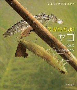 5分でわかるヤゴの生態!種類ごとの特徴、成長過程、飼育方法などを解説画像
