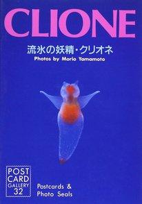 珍しすぎるクリオネの生態を紹介!透明な理由、食べ物や飼育のコツなどを解説画像