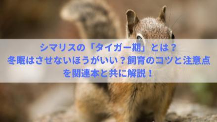 5分でわかるシマリス!飼育のコツと注意点、なつくポイント、冬眠などを解説画像