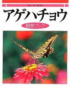 アゲハ蝶の幼虫の育て方をご紹介!餌やりから参考になる本まで画像