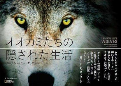 5分でわかるオオカミの生態!種類や大きさ、つがいと群れの仕組みなどを解説画像