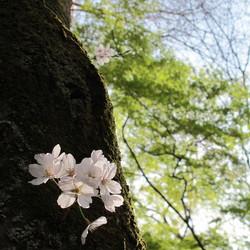 asanoayumiプロフィール画像