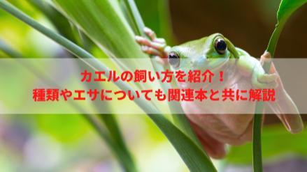 カエルの飼い方を紹介!餌は何をあげる?飼育しやすい種類は?画像