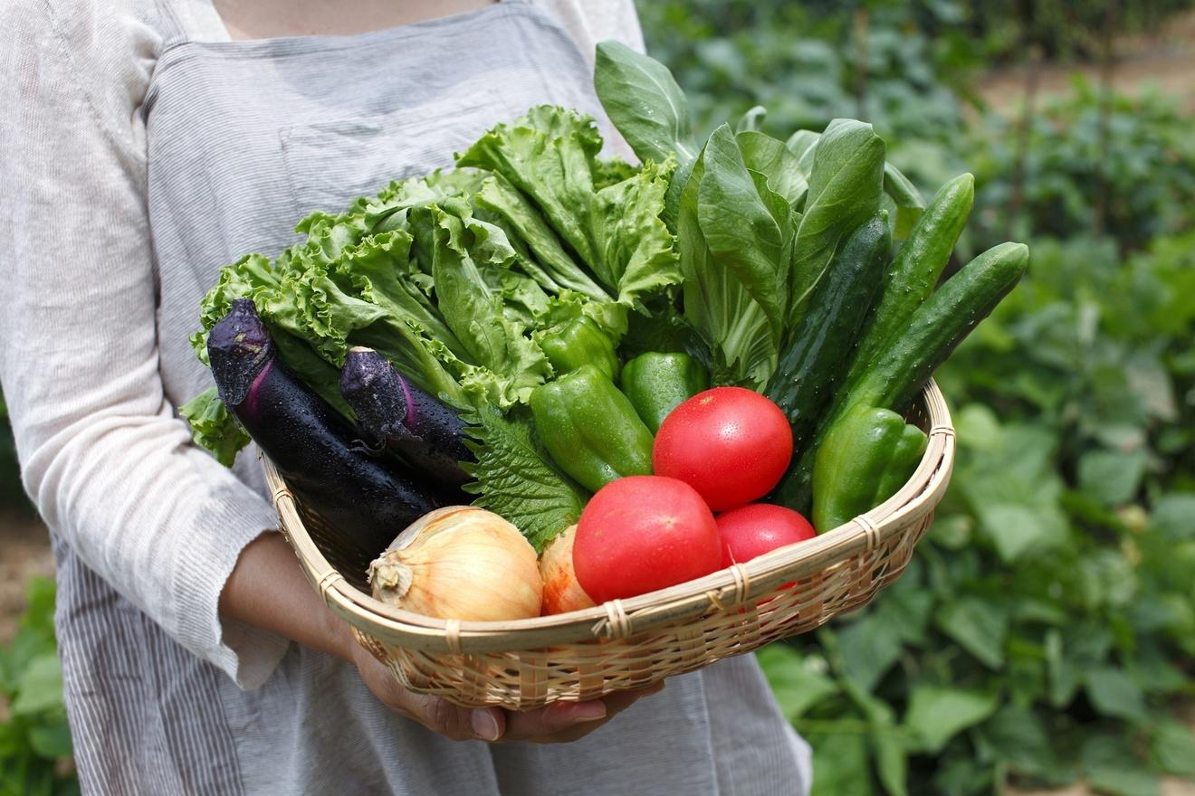 農業を始めるには?5分で分かる、仕事内容や種類、収入、補助金など