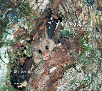5分でわかるヤマネの生態!生息地や寿命、冬眠の秘密などをわかりやすく解説画像