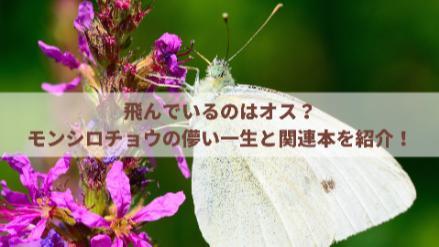 5分でわかるモンシロチョウの生態!卵~幼虫~さなぎ~成虫と一生を解説!画像