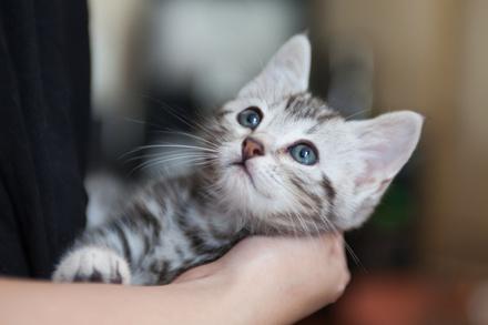 ストレスフルで癒されたいあなたには「猫」が効く! こころを潤す猫マンガ画像