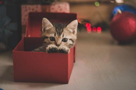 ねこ、ネコ、猫!文庫で読める面白い猫小説おすすめランキングベスト5!画像