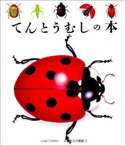5分でわかるてんとう虫の生態!種類ごとの特徴や、幸運を呼ぶジンクスなど画像
