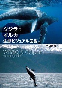 5分でわかるマッコウクジラ!最強動物の生態や、天敵のシャチなどを解説!画像