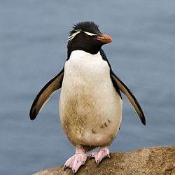 ペンギン プロフィール画像