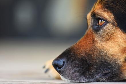 犬が活躍する小説おすすめ6選!推理系や感動系など、日本と海外の作品を紹介画像