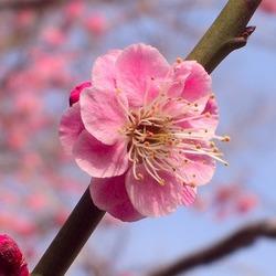 佐々木紀子 プロフィール画像