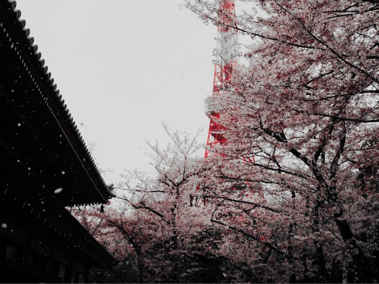 桜の木の下は「魔界」への入り口?春の始まりに読みたい少し不思議な3作品