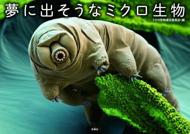 最強すぎるクマムシ!宇宙でも生きられる微小生物に弱点はある?生態を解説