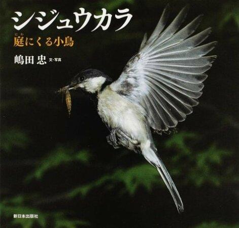 5分でわかるシジュウカラの生態!文章をつくる鳥⁉名前の由来や観察方法も