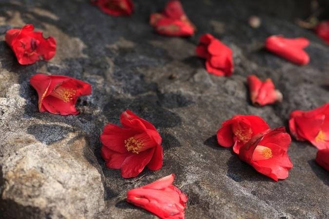 『智恵子抄』有名な5つの詩を解説!光太郎が智恵子に捧げた、愛のすべて