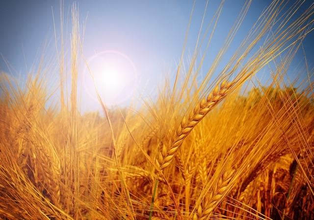 5分でわかる弥生時代!稲作など暮らしの特徴や卑弥呼をわかりやすく解説!