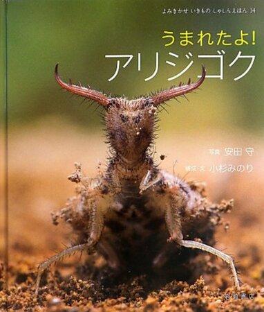 5分でわかるアリジゴクの生態!巣の仕組みや飼育法などをわかりやすく解説!