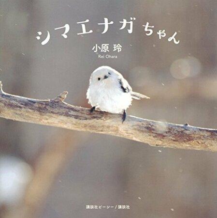5分でわかるシマエナガ!北海道に住む妖精?かわいすぎる見た目や生態を解説