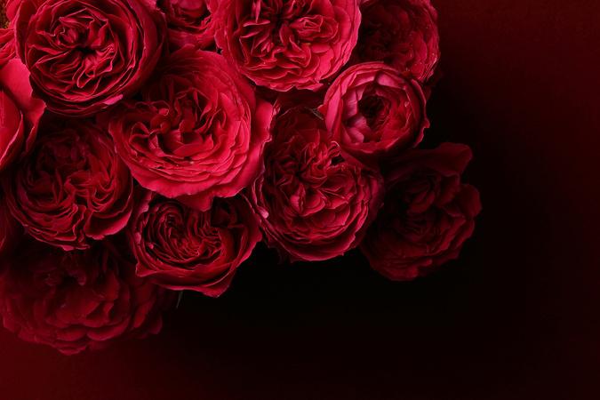 5分でわかる薔薇戦争!背景と流れ、結果を解説!おすすめ本も紹介