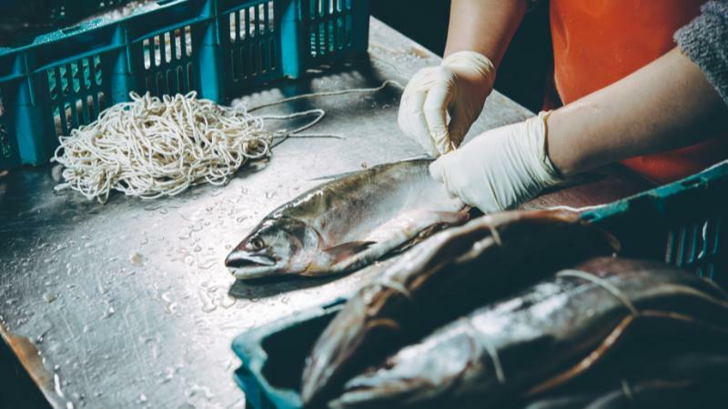 5分でわかる水産業界!就職は1次産業〜3次業界まで。業界の現状や今後の課題とは
