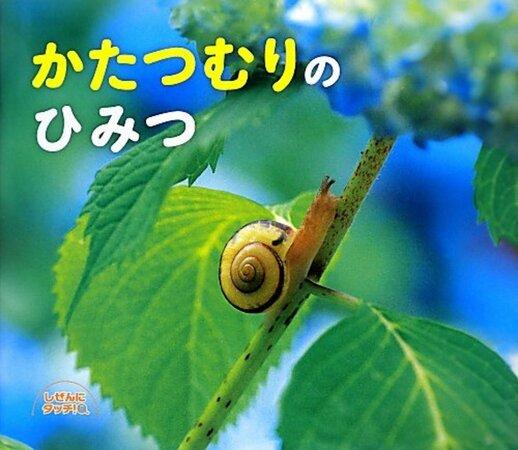 殻 カタツムリ 赤ちゃん