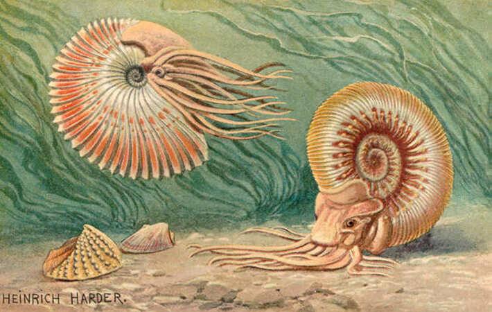 5分でわかるアンモナイト!生態や進化、絶滅した理由などをわかりやすく解説