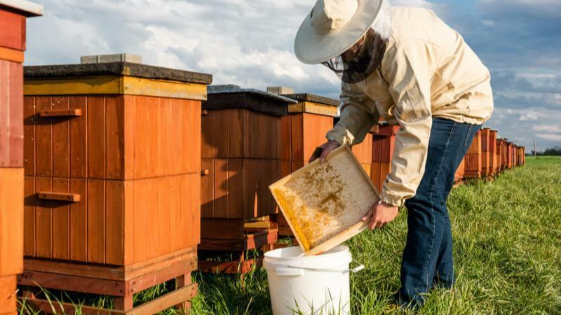 5分でわかる養蜂家!就職先は養蜂園がほとんど。おすすめの進学先、向いている人などを解説!
