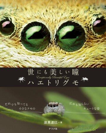 5分でわかる蜘蛛について!生態や種類、家に出た時の退治の仕方などを解説