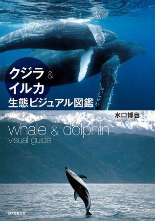 5分でわかるマッコウクジラ!最強動物の生態や、天敵のシャチなどを解説!