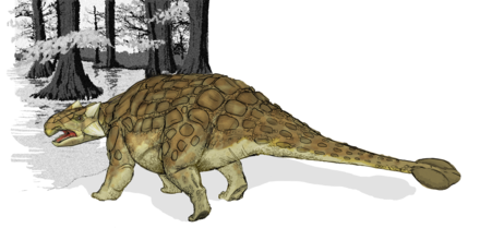 5分でわかるアンキロサウルス!尻尾のハンマーや化石など特徴を解説!画像